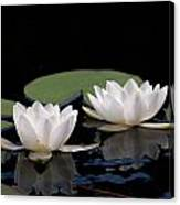White Water-lily 8 Canvas Print