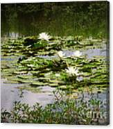White Water Lily Pond Canvas Print