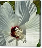White Wildflower I Canvas Print