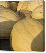White Yellow Pumpkins Canvas Print