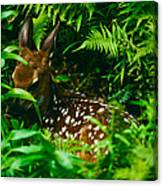 Whitetail Fawn And Ferns Canvas Print