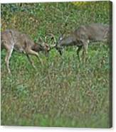 Whitetail Fighting_9668 Canvas Print