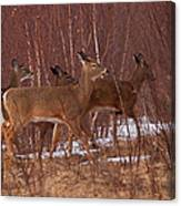 Whitetails On The Move Canvas Print