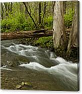 Whitewater River Spring 18 Canvas Print