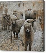 Who Are You Looking At Canvas Print