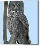 Whoo Are You Canvas Print