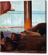 Whos Your Seal Canvas Print