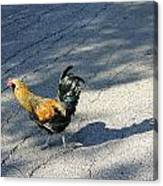 Why Did He Cross The Road Canvas Print