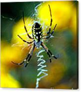 Wicked Spider Paint Canvas Print