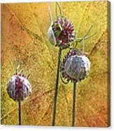 Wild Allium Ala Grunge Canvas Print