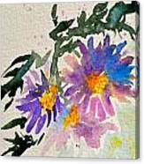 Wild Asters Canvas Print
