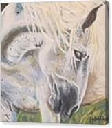 Wild Blush Canvas Print