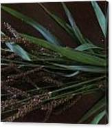 Wild Brown Grass Canvas Print