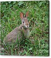 Wild Bunny Canvas Print