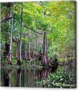 Wild Florida - Hillsborough River Canvas Print