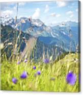 Wild Flower And Grass Canvas Print