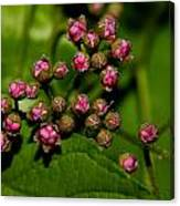 Wild Flower Blossoms 2 Canvas Print