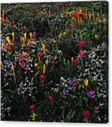 Wild Flower Field In Early Summer Canvas Print