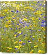 Wild Flowers In A Field Canvas Print