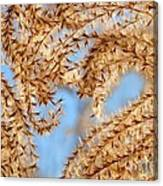 Wild Grasses Against A Blue Sky Canvas Print