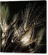 Wild Grasses Canvas Print