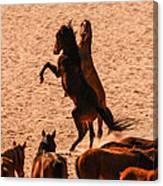 Wild Hooves Canvas Print