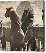 Wild Horse Battle Canvas Print