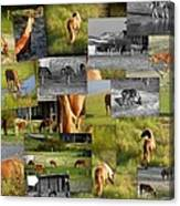 Wild Horse Collage  Canvas Print