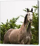 Wild Horse In The Wilderness Canvas Print