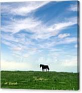 Wild Horse On Grassy Hill Canvas Print