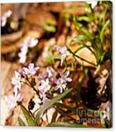 Wild Hyacinth Canvas Print