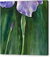 Wild Iris I Canvas Print