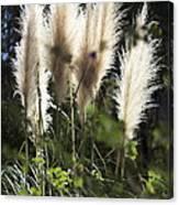 Wild Life Canvas Print