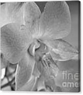 Wild Maui Orchid Canvas Print