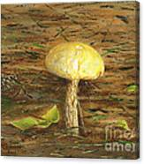 Wild Mushroom On The Forest Floor Canvas Print