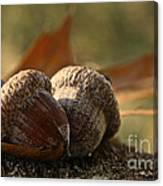 Wild Nuts Canvas Print