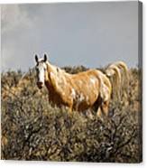 Wild Oregon Horse Canvas Print