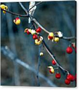 Wild Red Berries Out Of The Shell Canvas Print