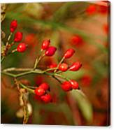 Wild Red Berry Reflections Canvas Print