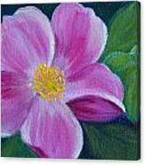 Wild Rose Study 6 Canvas Print