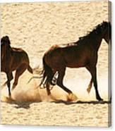 Wild Stallion Clash Canvas Print