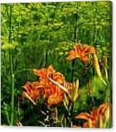 Wild Tiger Lilies 2 Canvas Print