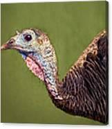 Wild Turkey Portrait Canvas Print