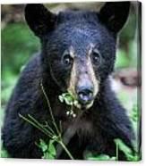 Wildflower Bear Canvas Print