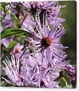 Wildflower Days Canvas Print