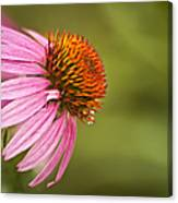 Wildflower Dew Drops Canvas Print