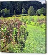 Wildflower Field Afternoon Canvas Print
