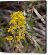 Wildflower On The Trail Canvas Print