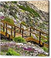 Wildflower Steps Canvas Print