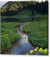 Wildflower Stream Canvas Print